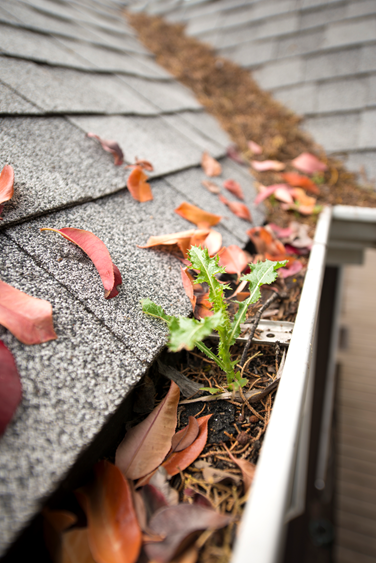 image of dirty gutters that could lead to emergency roof repair in Omaha